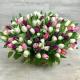 100 Multicolor Tulips